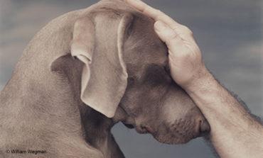 Πως αξιολογείτε το ελληνικό νομικό πλαίσιο ποινικής <br/>προστασίας των ζώων; Ποιό το προστατευόμενο <br/>έννομο αγαθό και ποιοί οι φορείς του;