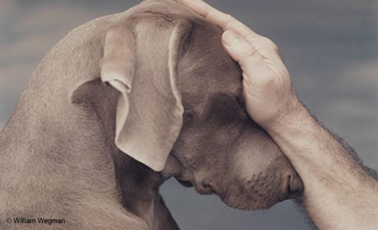 Πως αξιολογείτε το ελληνικό νομικό πλαίσιο ποινικής προστασίας των ζώων; Ποιό το προστατευόμενο έννομο αγαθό και ποιοί οι φορείς του;