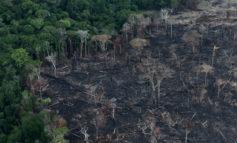 Οικοκτονία(ecocide):αναφορά <br>στο Διεθνές Ποινικό Δικαστήριο <br/>για την οικολογική καταστροφή <br/>του δάσους του Αμαζονίου